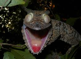giantleaftailedgecko